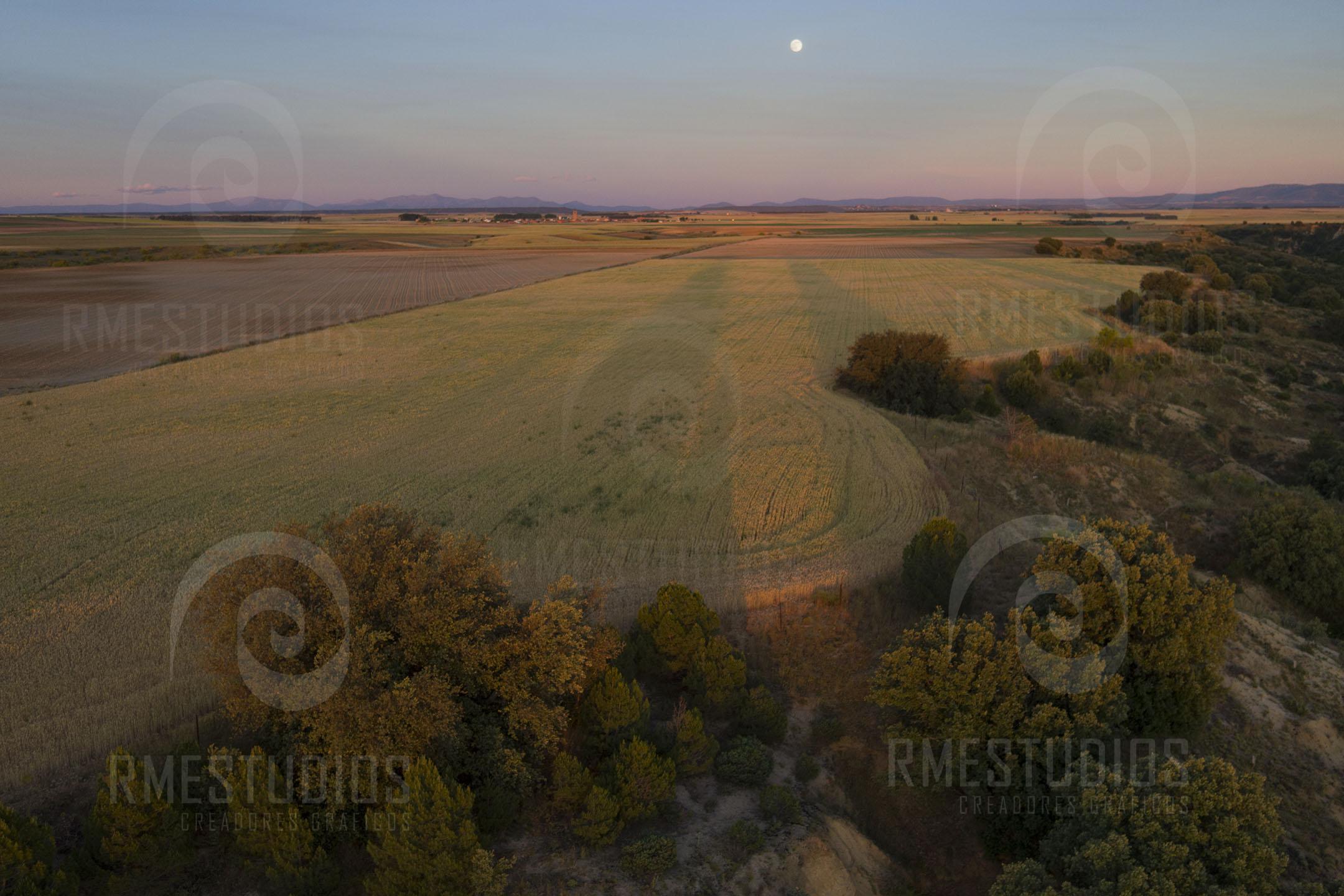 Campos de cereal al atardecer en La Moraña
