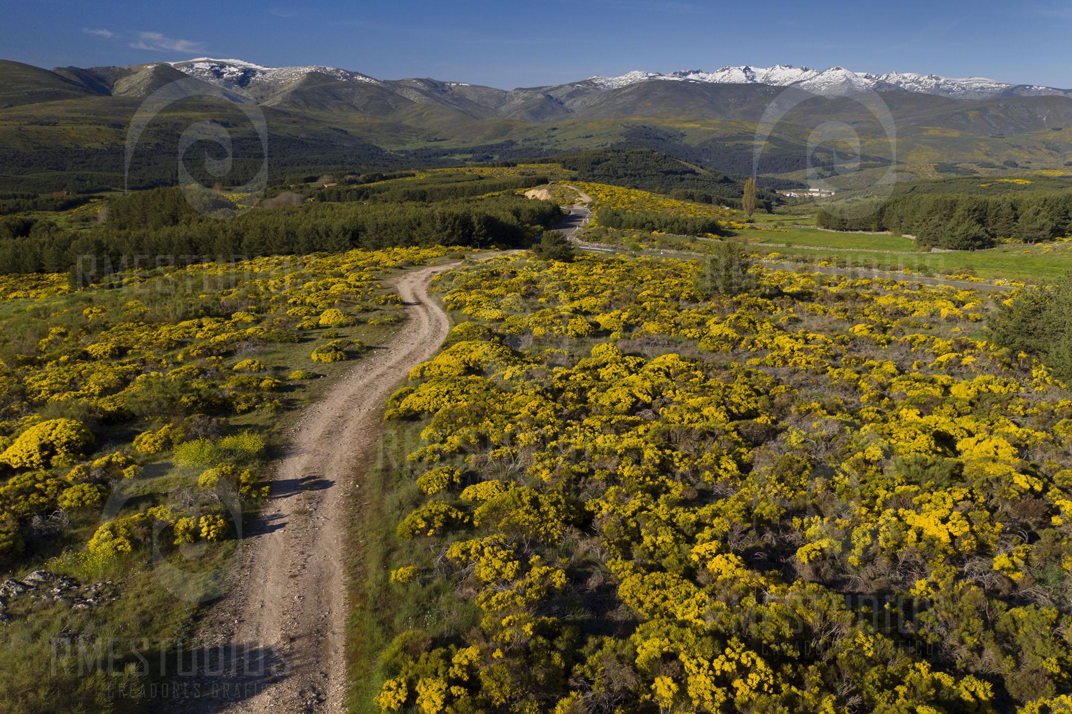 Sierra de Gredos con nieve y piornos en flor