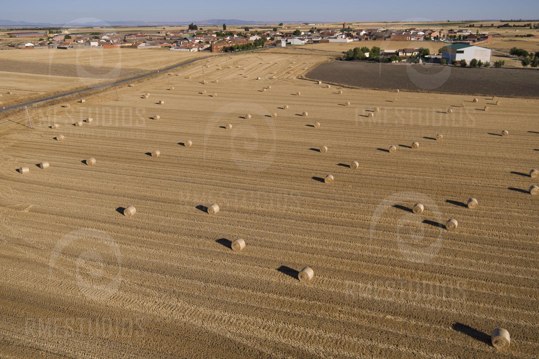 Campos de cereal en Langa